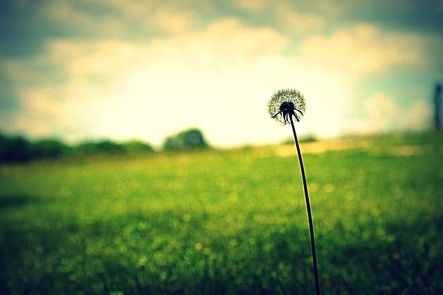 Gedanken zu Lebenswegen